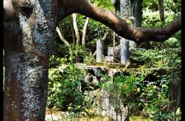 Anraku-ji (2C-81)