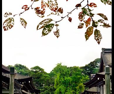 Shimogamo Shrine (Gateway) (ALC-111)