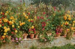 Flower Garden (IT-8926)