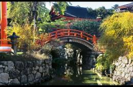 Shimogamo Shrine (ND-7)