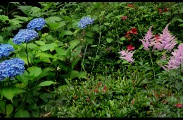 Flowers in Yamagata (Y-80)